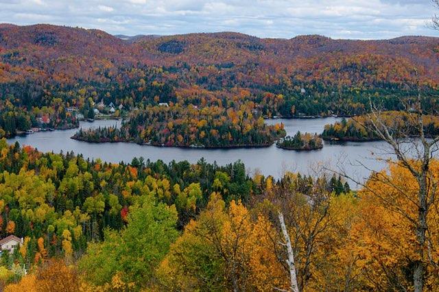 La forêt mixte du Canada